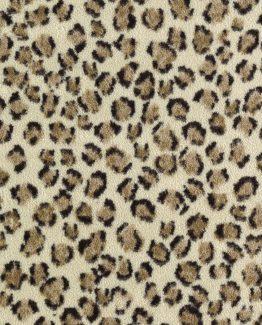 Fierce Cheetah