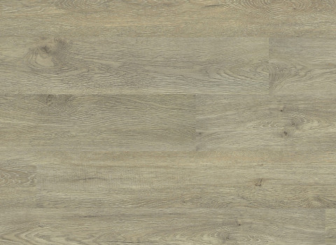 VV022-00807 Plymouth Oak