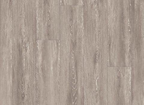 VV035-00902 Rainier Oak
