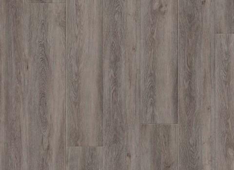 VV035-00906 Logan Oak