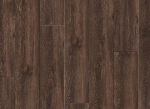 VV035-00909 Shasta Oak
