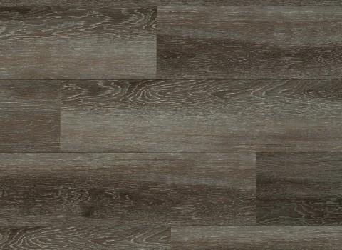 VV034-00602 Hampden Oak