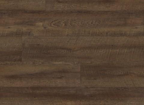 VV034-00608 Venice Oak
