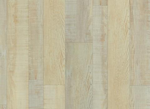 VV025-00011 Accolade Oak