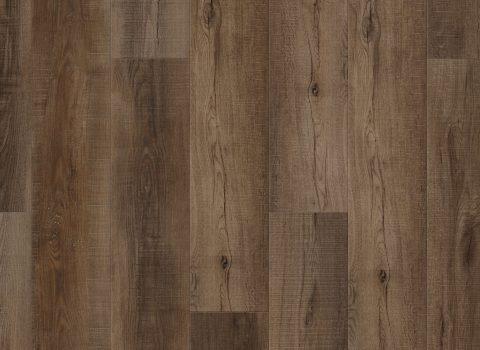 VV013-00764 Canary Oak
